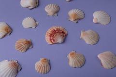 Морской состав Стоковые Фото