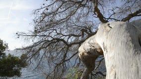 Морской хобот сосны во французской ривьере в солнечном дне сток-видео