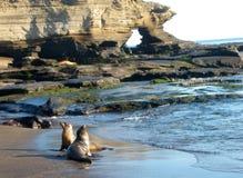 морсые львы galapagos Стоковые Изображения RF