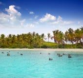моря пеликана пляжа бирюза карибского тропическая Стоковое Фото