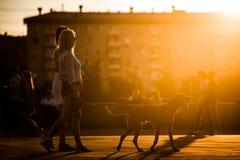 МОСКВА, РОССИЯ - 25-ОЕ ИЮНЯ 2016: Девушки идя с собакой на заходе солнца в Gorky паркуют Стоковые Фотографии RF