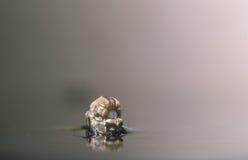 москит женщины рождения Стоковое Изображение RF