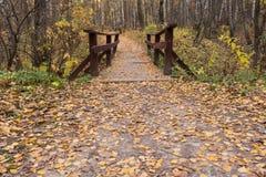 Мост вдоль пути в лесе, фантастическом взгляде стоковое фото rf