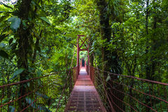 Мост веревочки - запас леса облака Monteverde стоковые фото