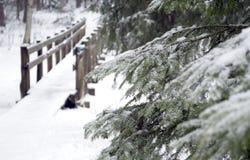 Мост в лесе зимы Стоковая Фотография
