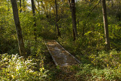 Мост в желтых древесинах Стоковое Изображение