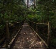 Мост в джунгли Стоковое Изображение