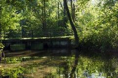 Мост в природе Стоковое фото RF