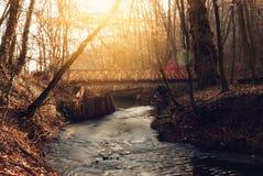 Мост в пуще Стоковое Изображение RF