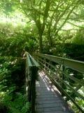 Мост в пуще Стоковое Изображение