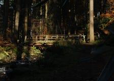 Мост в древесинах Стоковая Фотография