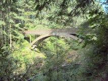 Мост в древесинах Стоковые Изображения