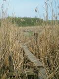 Мост в тростниках Стоковое Изображение