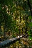 Мост деревянного моста над озером воды с тростниками и мертвым br дерева стоковые фото