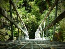 Мост леса в национальном парке Abel Tasman, южном острове, Новой Зеландии Стоковое Фото