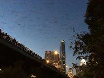 Мост летучей мыши Стоковые Изображения