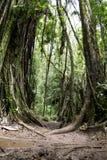 Мост джунглей стоковое изображение