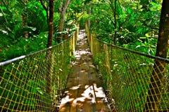 Мост джунглей Стоковая Фотография RF