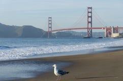 Мост золотого строба и чайка Стоковые Изображения