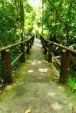 Мост идет в лес Стоковое Изображение