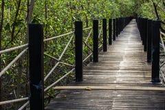 Мост и дерево Стоковая Фотография
