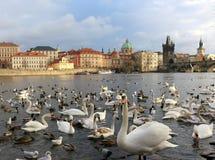 Мост Карла в Праге Стоковые Фото