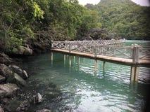 Мост к лесу мангровы Стоковое Изображение RF