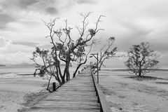 Мост над морем во время прилива отлива в черно-белом Стоковое Фото