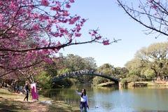 Мост над озером парка Ibirapuera Стоковые Изображения