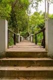 Мост над потоком в лесе Стоковые Изображения