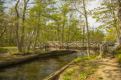 Мост над потоком леса Стоковые Изображения RF