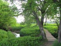 мост над потоком Стоковое Фото