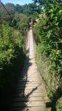 Мост обезьяны стоковое фото