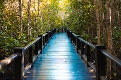 Мост дорожки в мангрове Pranburi, провинции Prachuap Khiri Khan, Таиланде Стоковые Фотографии RF