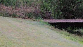 Мост парка над канавой дренажа сток-видео