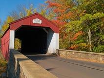 мост покрыл долину сосенки Стоковое фото RF
