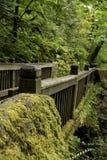Мост природы Стоковая Фотография