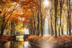 Мост пути прогулки над рекой с красочными деревьями во времени осени Стоковое Изображение RF