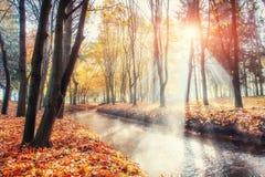 Мост пути прогулки над рекой с красочными деревьями в осени Стоковое Фото