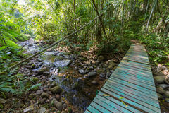 Мост пущи Стоковое фото RF