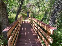 Мост пущи Стоковые Изображения