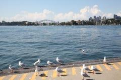 Мост Сиднея Стоковое Изображение RF