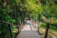 Мост смертной казни через повешение в лесе стоковые фото