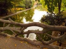 Мост уха Стоковые Фото