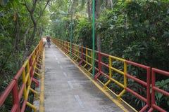 Мост для велосипеда около дерева Стоковые Фото