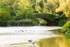 Мост Gapstow, Central Park, нью-йорк Стоковые Изображения RF