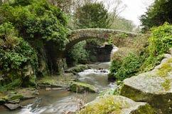 Мост Jesmond Dene каменный Стоковые Фотографии RF