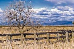мост reeds деревянное Стоковое Изображение