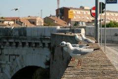 Мост Tiberius Чайки на мосте цветасто Стоковые Изображения