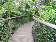 Мост Treetop Стоковое Фото